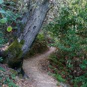 Montalvo's hiking trails