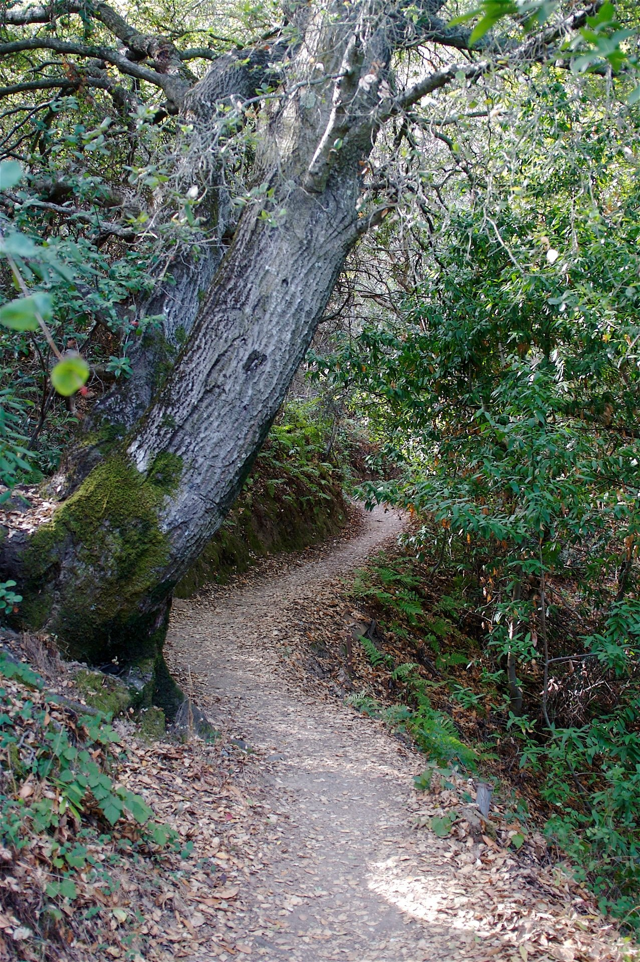 Montalvo Arts Center | Docent-Led Tour & Trail Hike