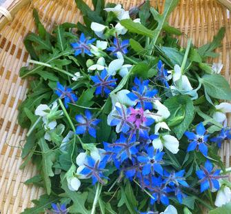 Beautiful spring greens with flowers from the garden.