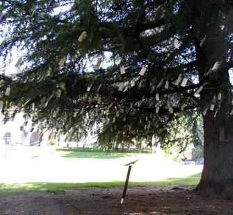 "Yoko Ono's ""Imagine Peace"" Wish Tree on the Great Lawn"