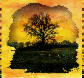 "Image transfer: ""Tree"" by Matt Callow"