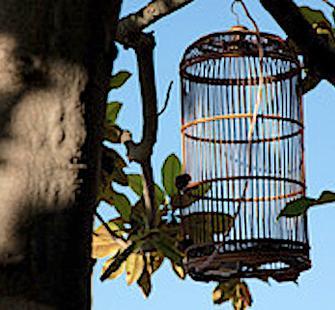 Birds of Invention