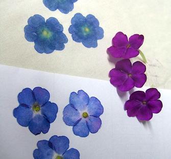 hapa zome pressed flower art